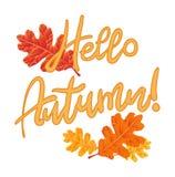 Composición de las hojas de otoño aisladas en un fondo blanco con Foto de archivo libre de regalías