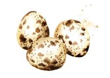 Composición de los huevos de codornices Ejemplo dibujado mano de la acuarela aislado en el fondo blanco Imagen de archivo libre de regalías