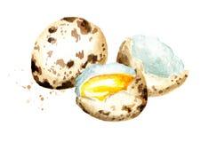 Composición de los huevos de codornices Ejemplo dibujado mano de la acuarela, aislado en el fondo blanco Fotos de archivo libres de regalías