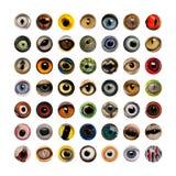Composición de los ojos del animal, aislada Imagen de archivo