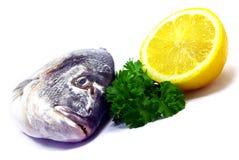 Composición de los pescados Foto de archivo libre de regalías