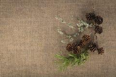 Composición de materiales naturales - rama del pino, conos de abeto, musgo foto de archivo