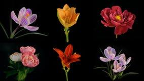 Composición de muchas flores florecientes Timelapse 4k almacen de metraje de vídeo