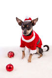 Composición de Navidad con el perro del pincher Imagen de archivo