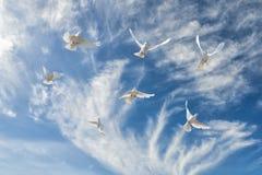Composición de palomas blancas hermosas en un cielo azul Imagen de archivo