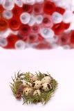 Composición de Pascua con la decoración festiva de las flores y huevos de las invitaciones tradicionales los mini imágenes de archivo libres de regalías