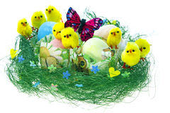 Composición de Pascua con los huevos pintados, los pollos divertidos y la mariposa Imagenes de archivo