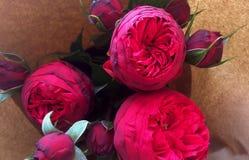 Composición de piones color de rosa Flores de Burdeos en el papel de Kraft Fotografía de archivo