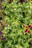 Composición de plantas Imagenes de archivo
