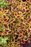 Composición de plantas Imagen de archivo libre de regalías