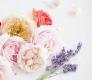 Composición de rosas rojas y de la lavanda violeta imagen de archivo libre de regalías