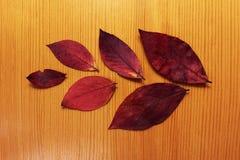 Composición de seis hojas secas del otoño imágenes de archivo libres de regalías