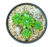 Composición de succulents Fotografía de archivo