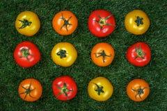 Composición de tomates amarillos y anaranjados rojos fotografía de archivo libre de regalías