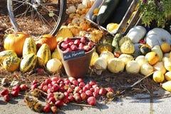 Composición de verduras coloridas Calabaza, appels, calabacín foto de archivo