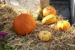 Composición de verduras coloridas Calabaza, calabacín, fotos de archivo libres de regalías