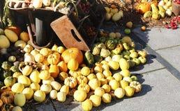 Composición de verduras coloridas Calabaza, calabacín foto de archivo libre de regalías