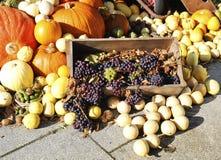Composición de verduras coloridas Calabaza, calabacín, uvas foto de archivo libre de regalías