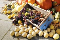 Composición de verduras coloridas Calabaza, uvas, calabacín imágenes de archivo libres de regalías