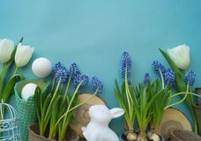 Composición decorativa de Pascua en un fondo azul Conejo blanco, tulipanes, macetas, huevos sin pintar y un árbol imagenes de archivo