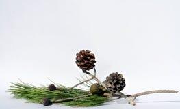 Composición del árbol de pino Imágenes de archivo libres de regalías