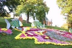 Composición del crisantemo Imagen de archivo libre de regalías