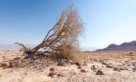 Composición del landscspe de la gama de montañas del arbusto del árbol del desierto Fotos de archivo libres de regalías