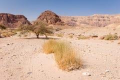 Composición del landscspe de la gama de montañas del arbusto del árbol del desierto Fotos de archivo