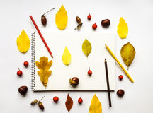 Composición del otoño con el álbum y los lápices, adornados con las hojas amarillas, bayas, castañas Endecha plana, visión superi Fotos de archivo libres de regalías