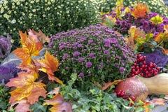 Composición del otoño con las calabazas, los asteres, las bayas y las hojas de arce fotografía de archivo