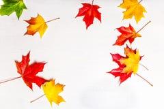 Composición del otoño con las hojas de arce amarillas en el tabl de madera blanco Imagen de archivo