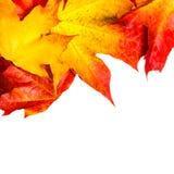 Composición del otoño con las hojas de arce amarillas en el tabl de madera blanco Fotografía de archivo