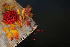 Composición del otoño de calabazas, de hojas, de las bayas de serbal y de la vela Imagen de archivo libre de regalías