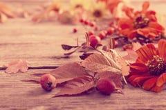 Composición del otoño en fondo de madera Fotografía de archivo libre de regalías