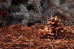 Composición del ` s del Año Nuevo de los conos de un pino Imagenes de archivo