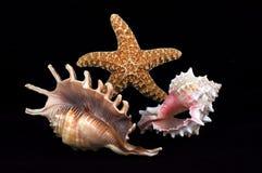 Composición del Seashell Fotos de archivo