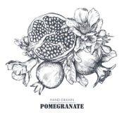 Composición del vector de las frutas de la granada, flores, ramas fotos de archivo libres de regalías