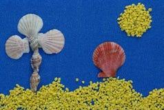 Composición del verano con las cáscaras en fondo azul del brillo fotografía de archivo libre de regalías