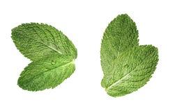 Composición doble de dos hojas de menta aislada en blanco Foto de archivo