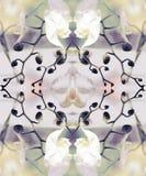 Composición estilizada del gráfico de la orquídea del arte Imagen de archivo