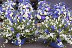 Composición florística Imagen de archivo
