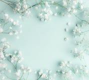 Composición floral con la luz, masas airosas de pequeñas flores blancas en el fondo de los azules turquesa, visión superior, marc imagenes de archivo