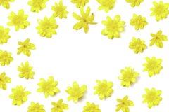 Composición floral de la forma oval de flores amarillas brillantes en blanco imágenes de archivo libres de regalías