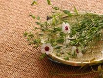 Composición floral del balneario fotos de archivo libres de regalías