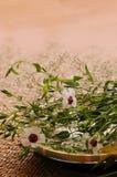 Composición floral del balneario imagenes de archivo