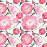 Composición floral herbaria blanda elegante maravillosa del peonías rosadas con las hojas del verde y el modelo rojo de los brote Fotos de archivo