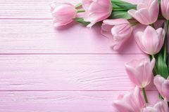 Composición hermosa con los tulipanes para el día del ` s de la madre fotografía de archivo