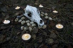 Composición hermosa de Halloween con las runas, el cráneo, el tarot y las velas en la hierba en ritual oscuro del bosque del otoñ Imagen de archivo