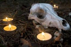 Composición hermosa de Halloween con las runas, el cráneo, el tarot y las velas en la hierba en ritual oscuro del bosque del otoñ Imagenes de archivo