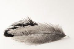 Composición horizontal de dos plumas foto de archivo libre de regalías